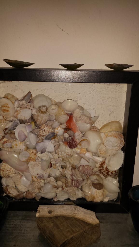 Muscheln und Treibholz