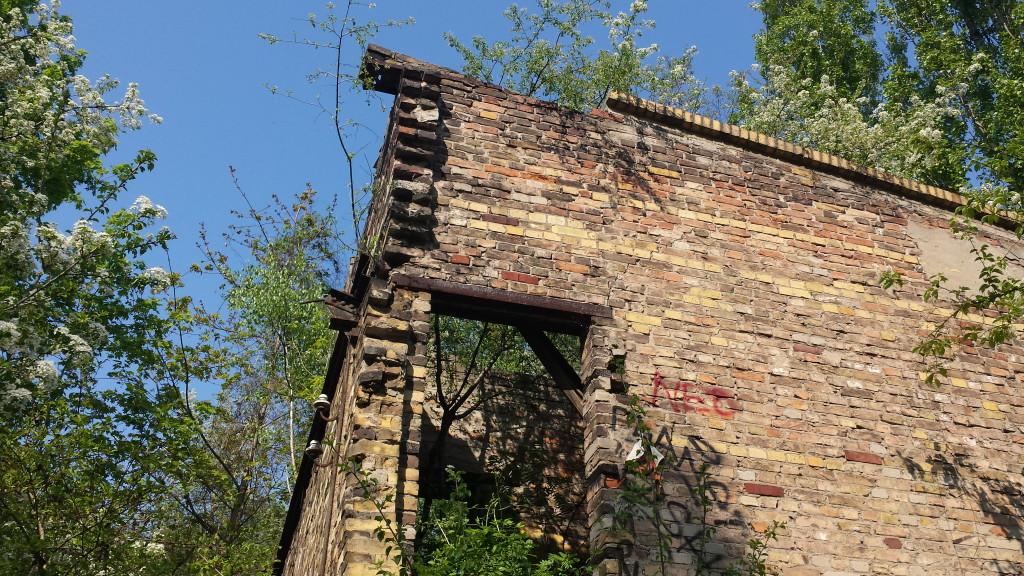 bewachsene Ruine