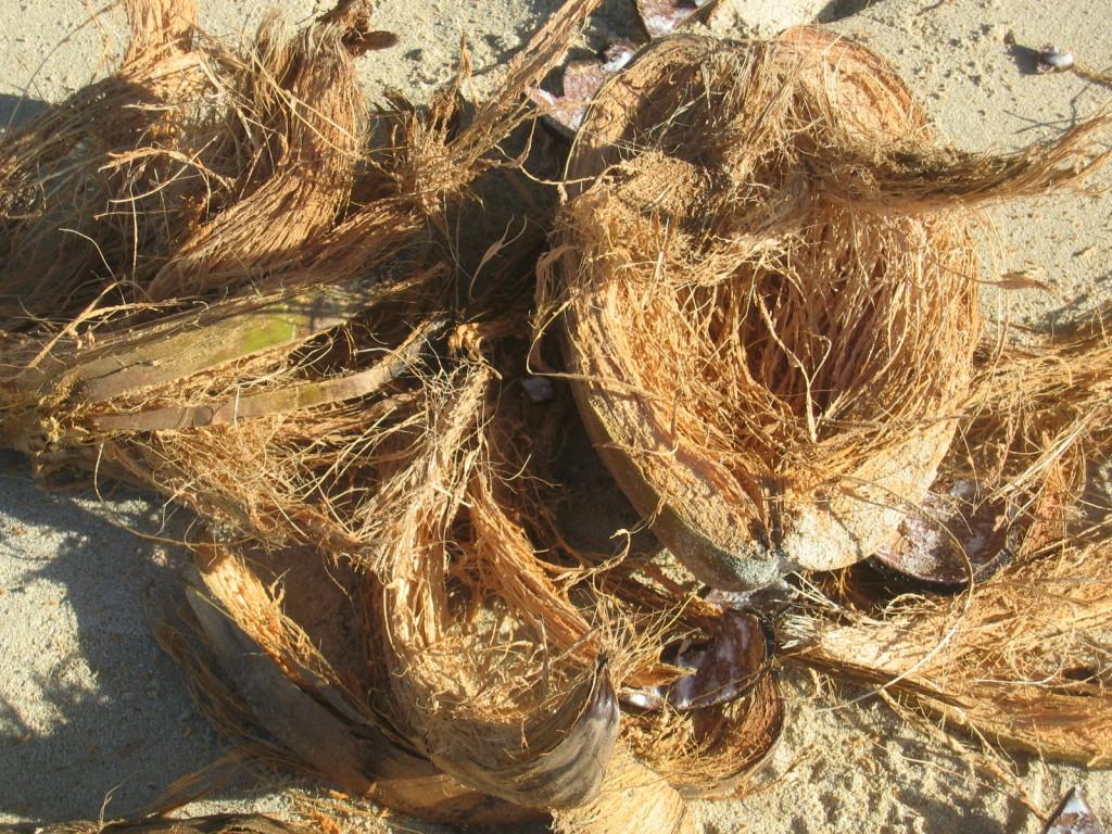 Cocosnuss-Schale